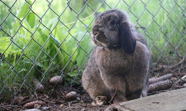 Conigli stabili: come mantenerli correttamente