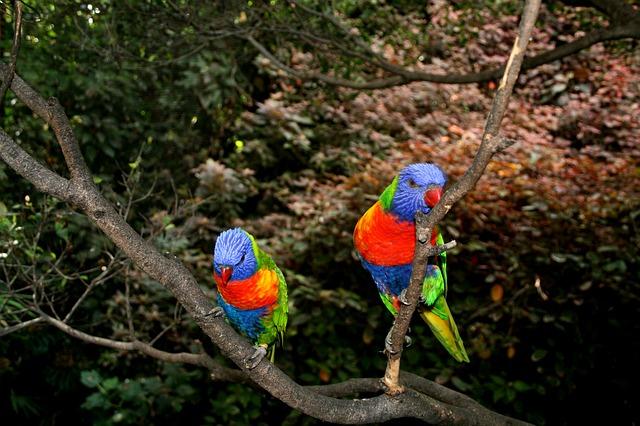 Registrazione dei pappagalli: come farlo bene