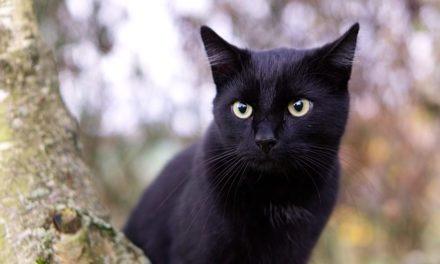 Raggio di movimento dei gatti: Vale la pena sapere