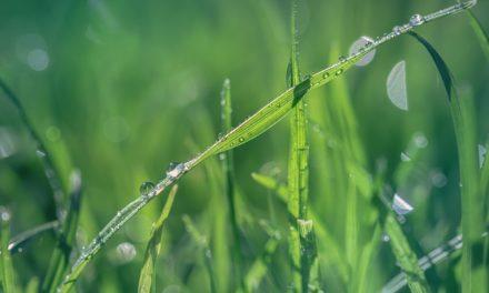 Falciatura di un prato alto: consigli per il giardinaggio