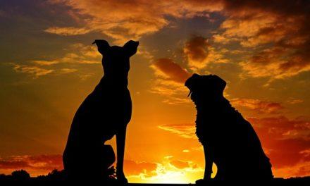 Cibo cane: corteccia: questo è come si nutre il vostro cane secondo le abitudini di alimentazione dei lupi