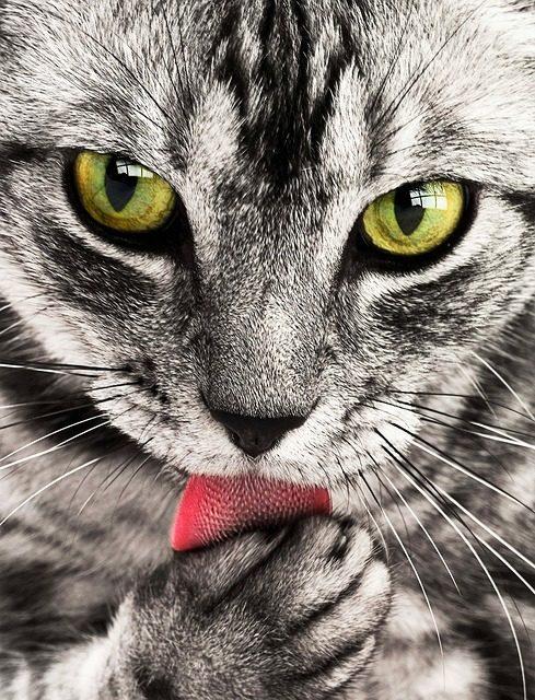 Gatti che calpestano sul posto: Spiegazione