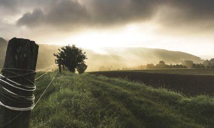Posa del manto erboso: scegliere la stagione e il tempo giusto