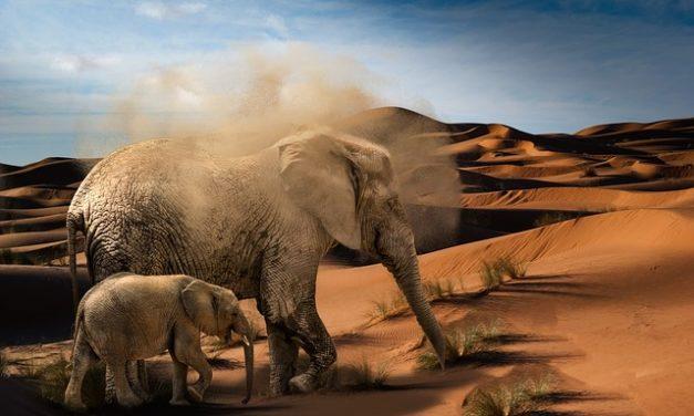 Coltivare e nutrire un albero di elefante
