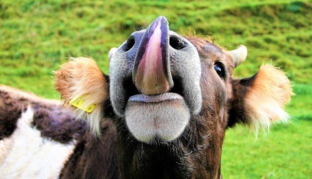 Rivestimento linguetta bianca: come rimuoverlo