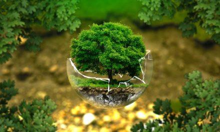 Allevamento bonsai: come allevare i germogli