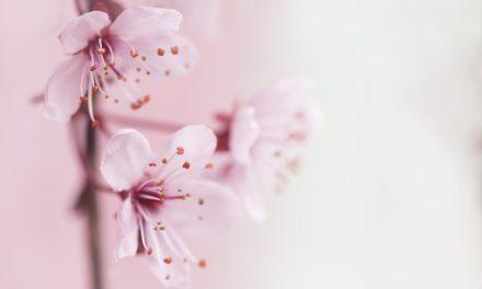 Taglio di un albero di rosa come un giardiniere
