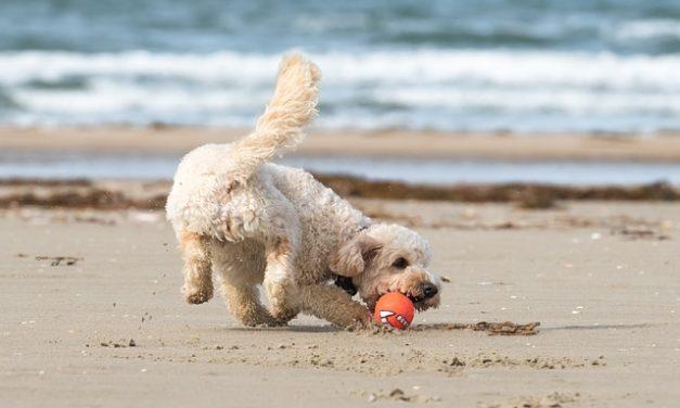 Quanto costa uno Yorkshire Terrier? Fatti interessanti sui costi di detenzione degli animali