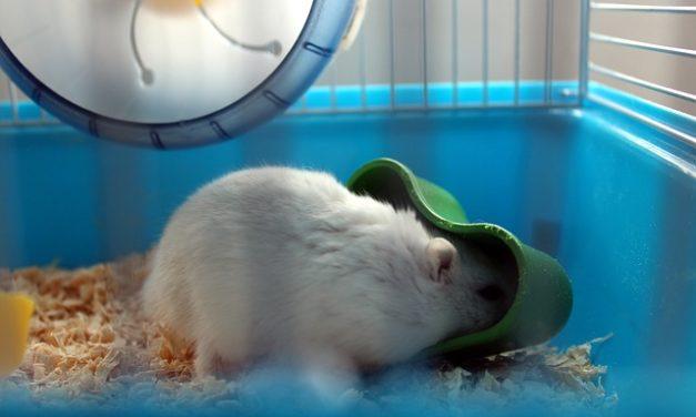 Trattare con i criceti: non annoiarsi mai con l'animale