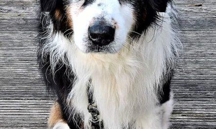 Cosa fare in caso di congiuntivite nei cani? Note: Note