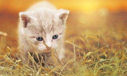 I gatti non tosano: istruzioni per la cura della pelle