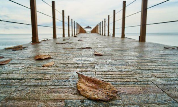 L'ortensia ha foglie brune: cosa fare?