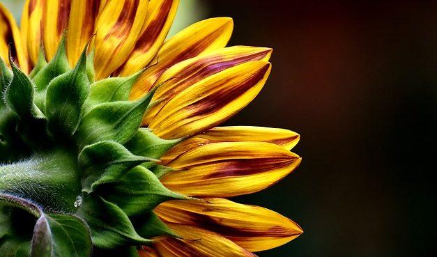 Piantare correttamente i semi di fiori: si noti questo