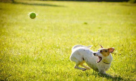 Tedesco cacciatore tedesco: come allevare i cuccioli correttamente