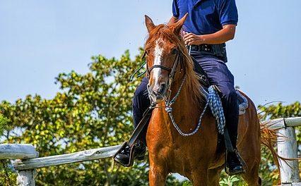 I proprietari di cavalli non pagano l'affitto stabile: potete farlo come proprietari stabili