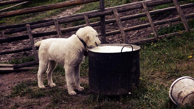 Migliore per il cane: Confronto dei metodi di alimentazione