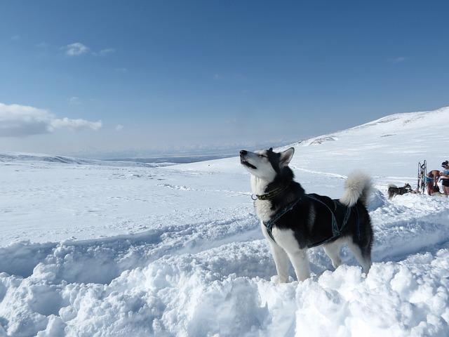 Raffreddamento dei cani nel caldo: ecco come funziona
