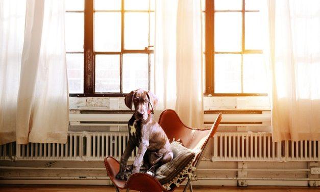 Allenamento dei cani senza stress: come funziona