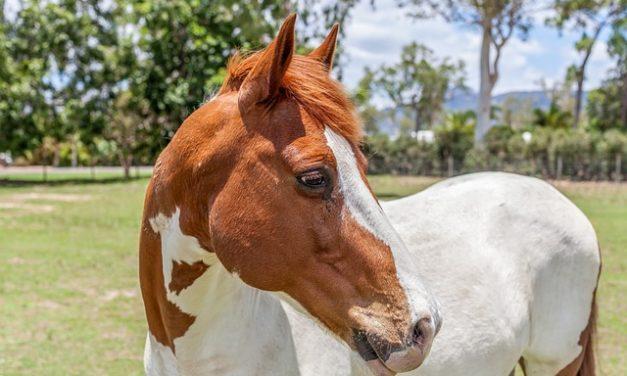 Equitazione corretta nel reparto