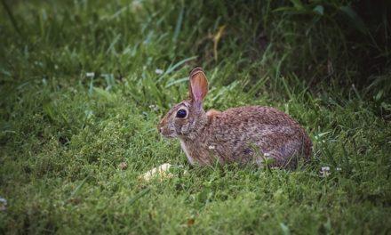 Perché il mio morso di coniglio? Come interpretare correttamente il comportamento del tuo animale domestico