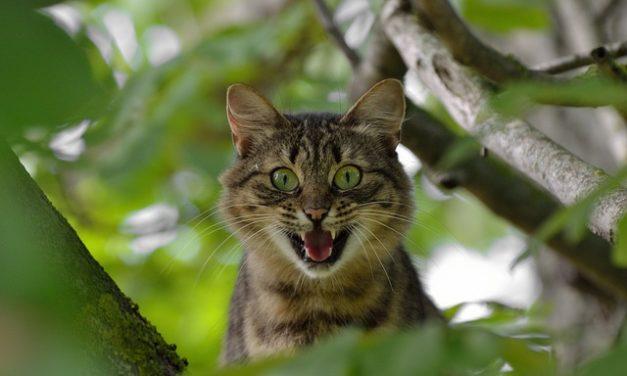 Terrificante: il tuo gatto sarà più rilassato