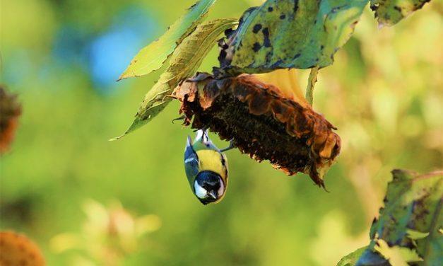 Uccelli in voliera: alimentazione invernale adeguata alle specie