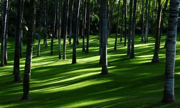 Acquista erba erbosa in un negozio fai da te: cosa dovresti considerare