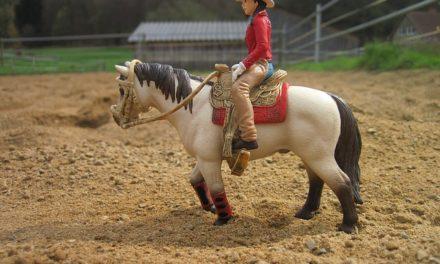 Impara a cavalcare un cavallo occidentale: ecco come funziona