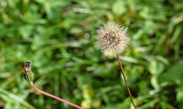 Seminare correttamente i semi di erba