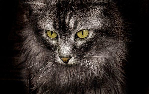 Come educare i gatti alle case: come educare il tuo gatto
