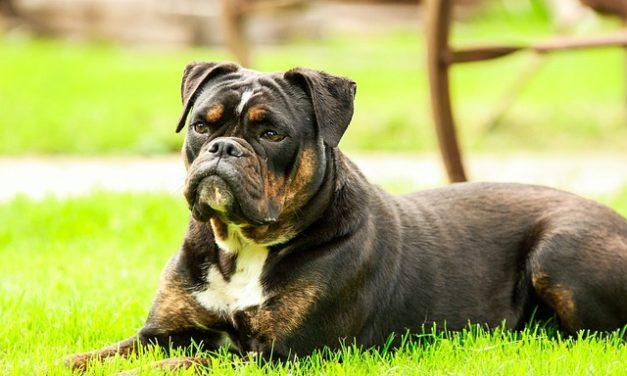 Costi per un cucciolo misto: Suggerimenti per l'acquisto