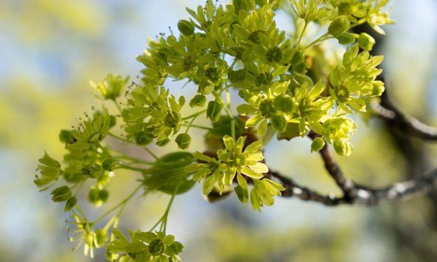 Promuovere la crescita delle piante