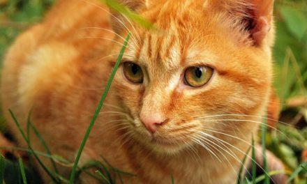 Riconoscere e curare i problemi di stomaco nei gatti: è così che funziona