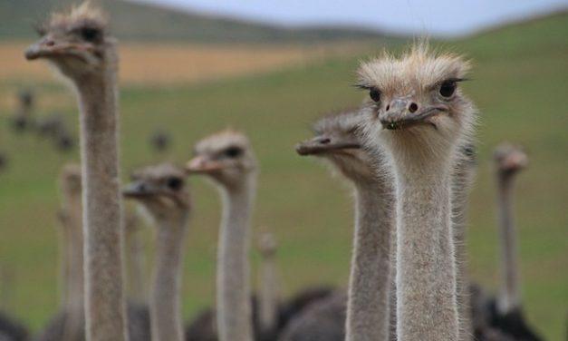 Agriturismo di struzzi in Italia: Panoramica