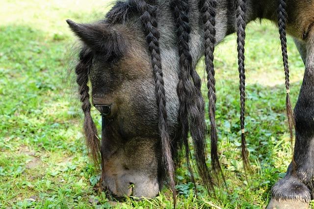 Così si può tagliare da soli un pony: diagonale o diritto