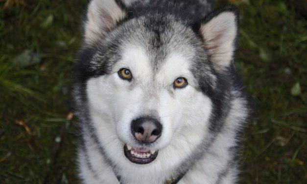 Il cane morsi – in modo da potersi abituare ad esso