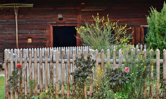 Abete Douglas: cura & conservazione del legno fatto a destra