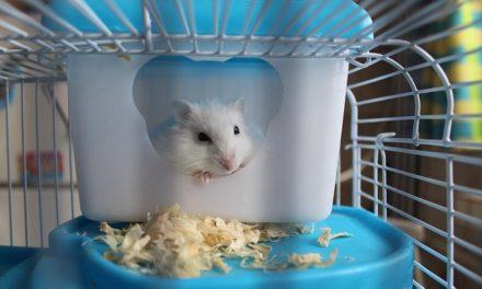 Costruire la propria gabbia del criceto: Istruzioni