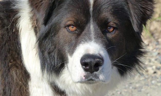 Il cane è debole: cosa fare?