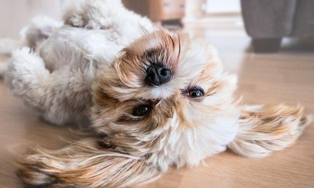 Richiesta di approvazione da parte del locatore: Cani: Come conservare un cane