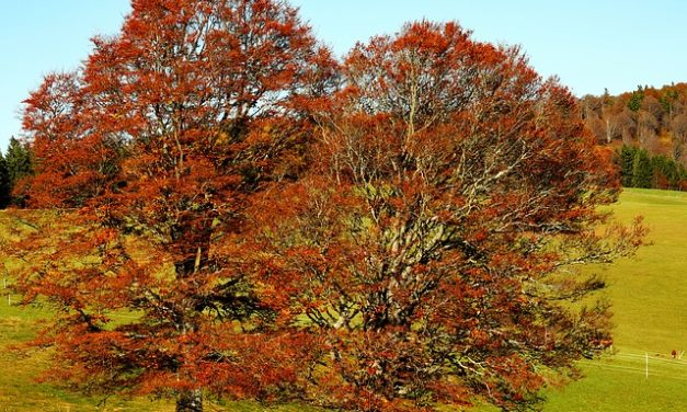 Ciclo di vita dell'albero: Panoramica
