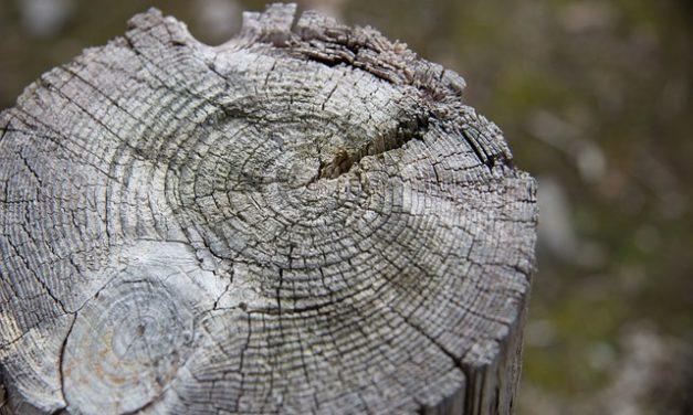 Il ceppo d'albero non dovrebbe crescere di nuovo: è così che si fa