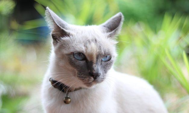 Alito cattivo nei gatti: questo è ciò che si può fare al riguardo
