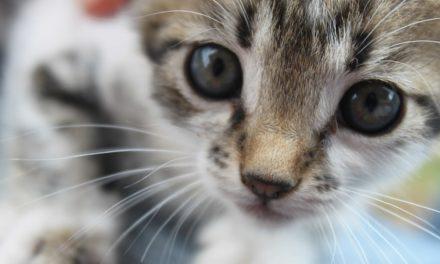 Gatto scavo in vaso: utile