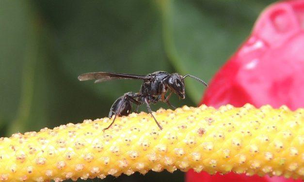 Trattare il morso vespa sulla lingua