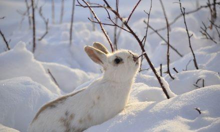 Cibo coniglio in inverno: come nutrire correttamente i vostri animali domestici