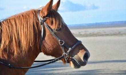 Contratto di protezione per il cavallo