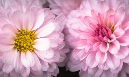 Decorazione di festa in giardino: idee per una celebrazione sensuale