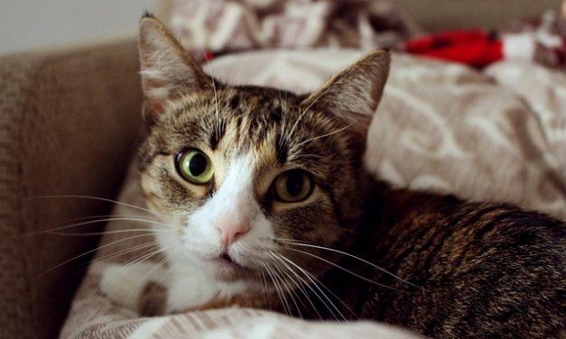 Lavare i gatti: cosa dovresti considerare