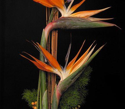 Progettare le proprie composizioni floreali: procedere come segue